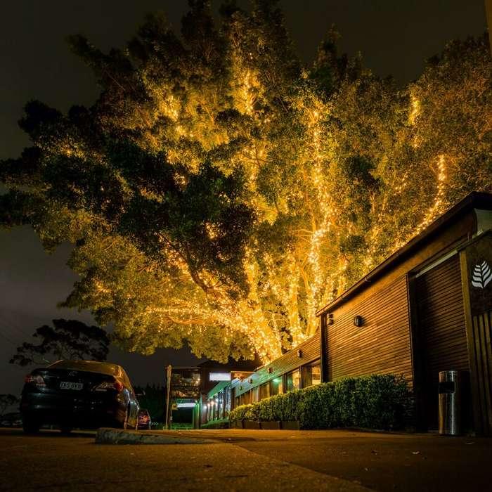 Праздник к нам -и к ним- приходит: пост о том, как украшают деревья во всём мире-40 фото-