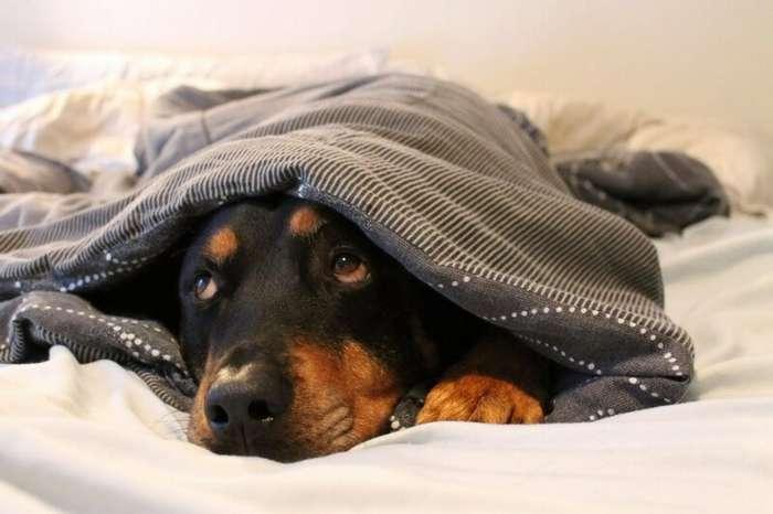 История одной собачьей жизни-5 фото-