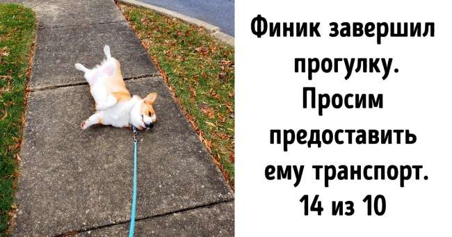 Втвиттере есть аккаунт, где оценивают собак нестандартным способом. Мыотобрали 20+самых милых конкурсантов