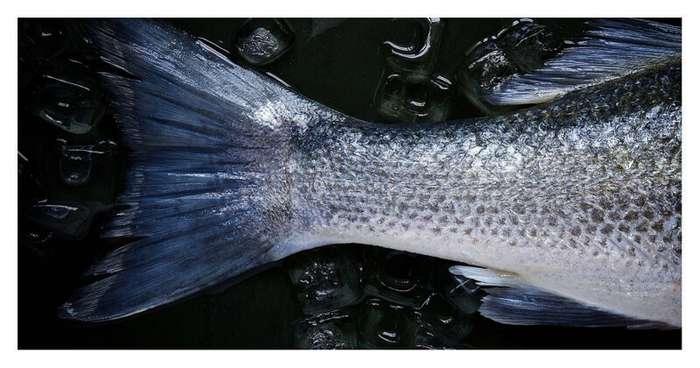 Российские академики назвали самую полезную для здоровья рыбу-4 фото-