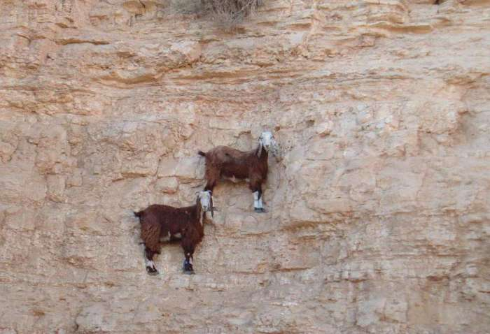 Животные-скалолазы