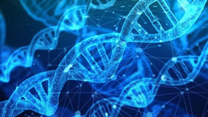 Чем отличаются генетически модифицированные дети от обычных
