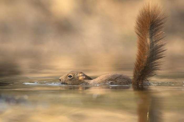 Как плавают братья наши меньшие