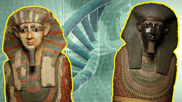 Научные открытия, сделанные благодаря анализу древних ДНК