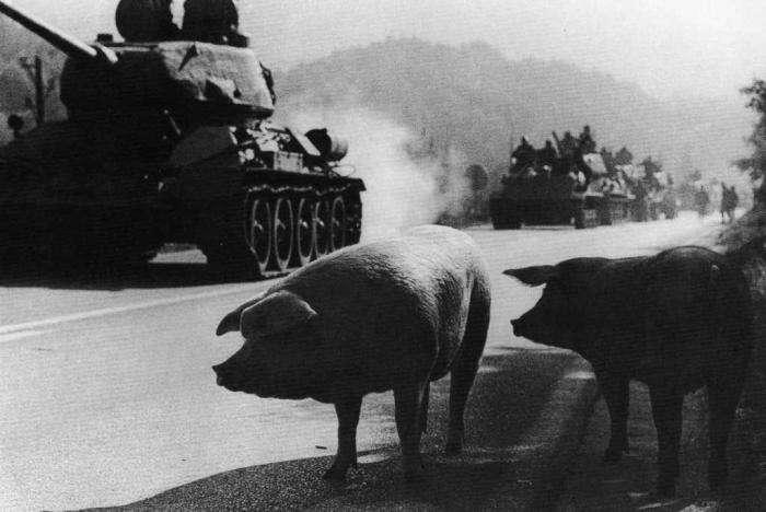 Раненая свинья и обиженный кондитер: 6 вооруженных конфликтов с самым нелепым поводом
