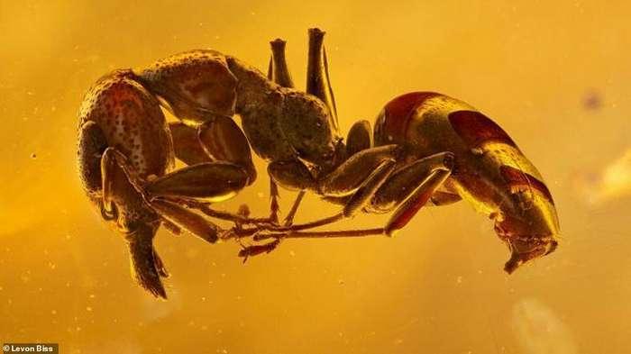 Потрясающие макроснимки древних насекомых в янтаре