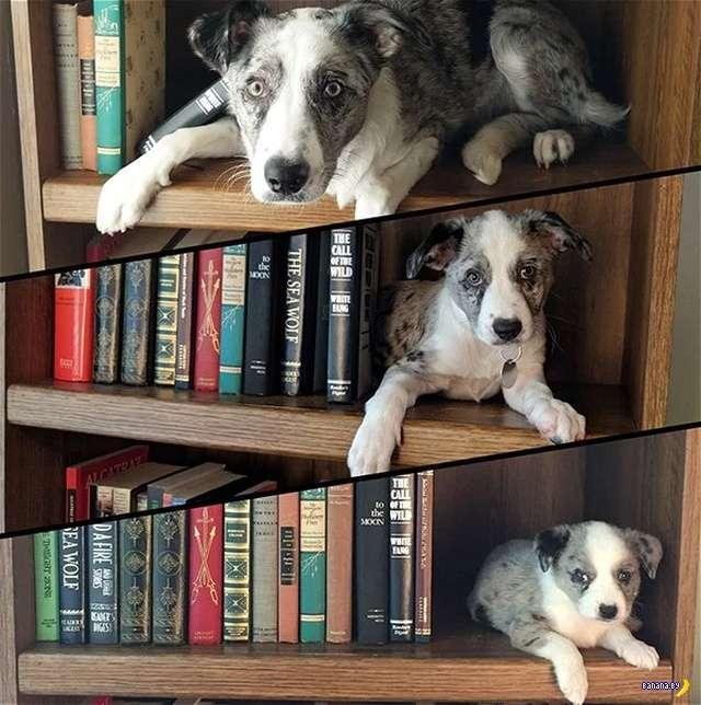 Превращение щенков в собак