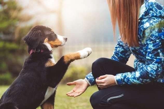 Как животные помогают лечению людей
