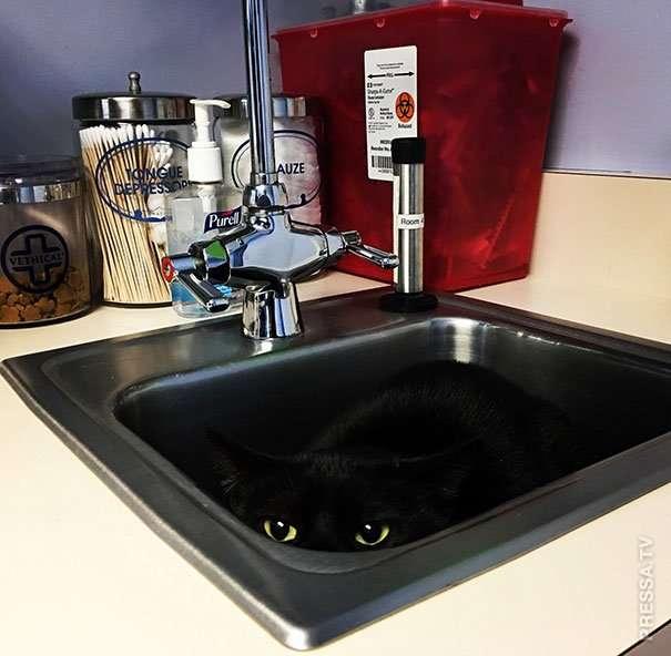 Куда прячутся кошки, спасаясь от ветеринара