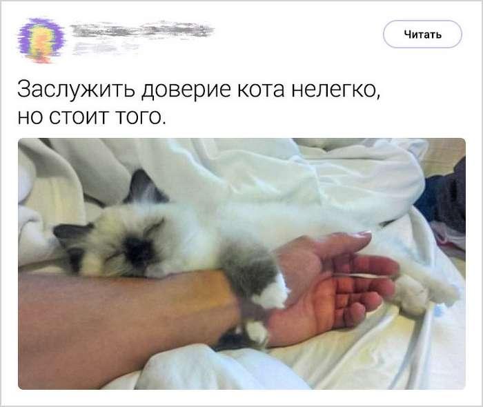 25твитов, которые вызовут желание немедленно потискать своего котика (Или завести его)