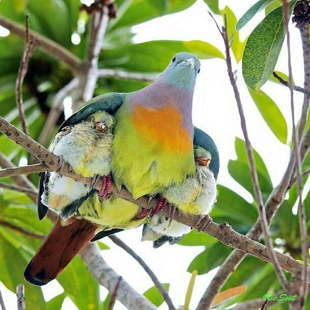 Малыши и мамы из мира животных интересное