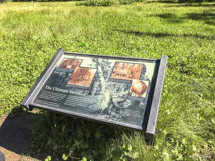 Тропа Большого пня — памятник человеческому вандализму и жестокости к природе интересное