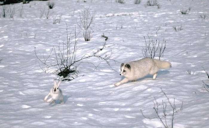Животные, которые смогли бы выжить даже в аду-7 фото-
