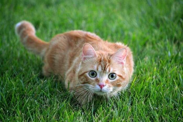 Вредные привычки кошек, которые мы воспитываем сами (11 фото)