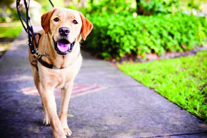 Доктор Гавболит: животные, которые действительно лечат людей