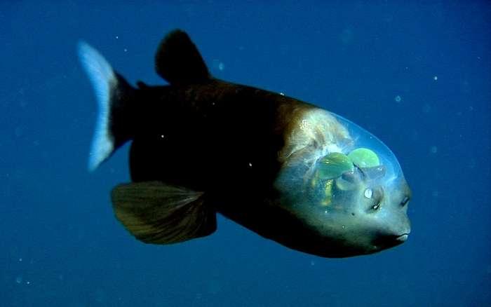Чур меня, чур: реальные морские монстры, которые страшнее фантастических