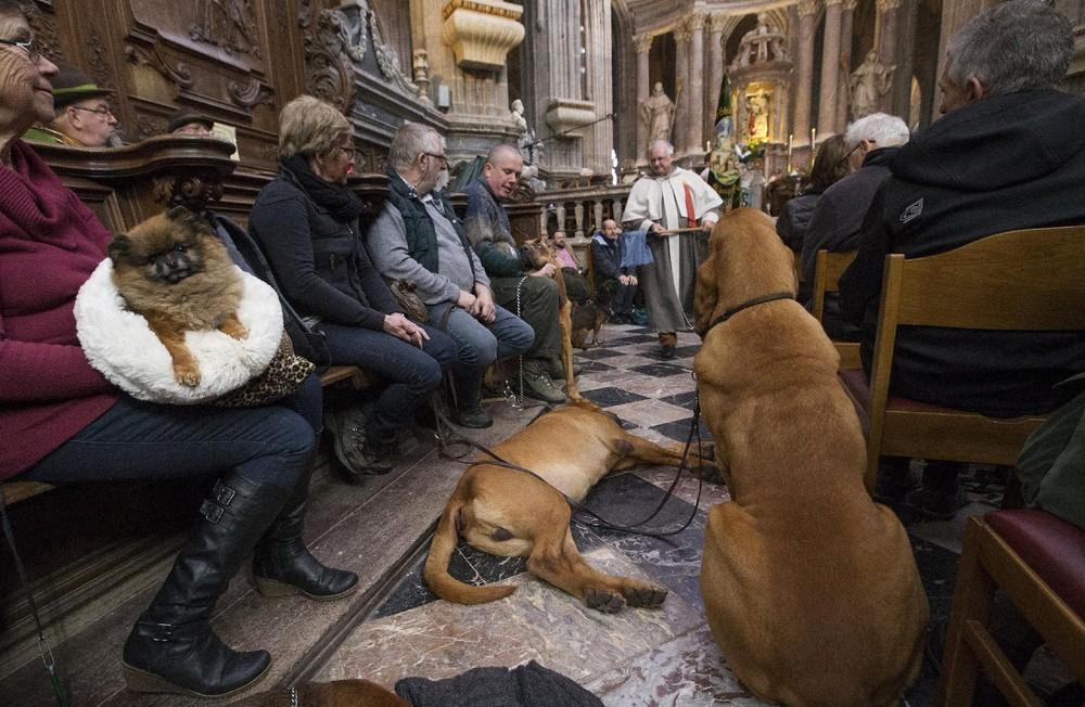 В Бельгии проводят церемонии благословения животных