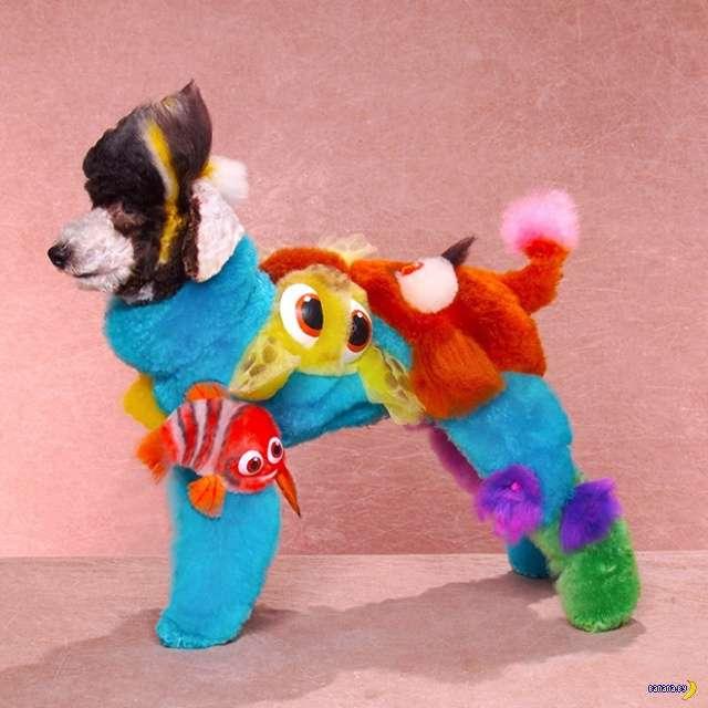 Собаки и безумный груминг Интересное