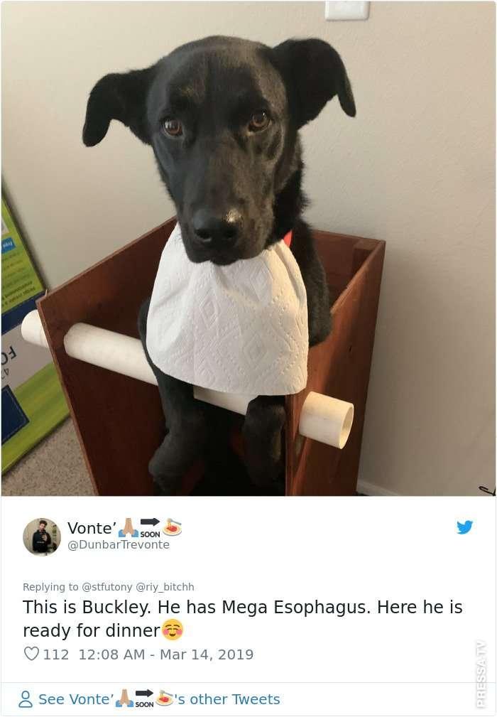 Специальный стул для кормления больной собаки