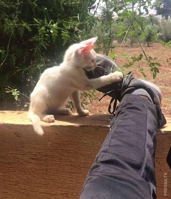 Проснулся, а на животе бездомный котенок… Интересное