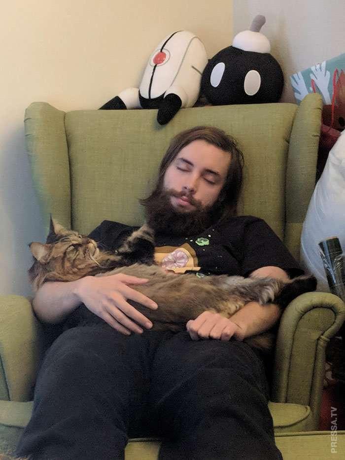 Царственные кошки мейн-куны Интересное