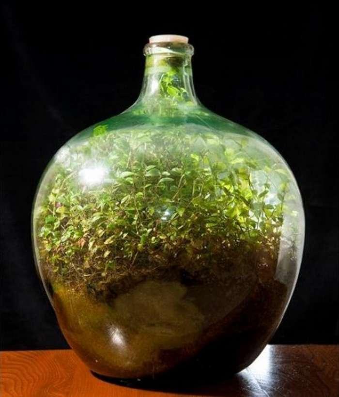 Экосистема в стеклянном сосуде: растение не поливали 56 лет, но оно живо