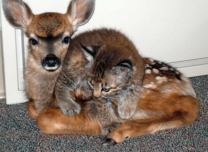 Удивительные истории о дружбе животных-3 фото-