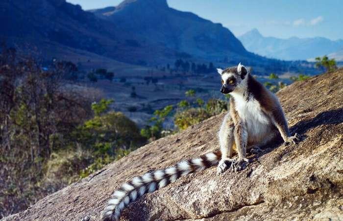 Как русские живут на Мадагаскаре?                      Интересное