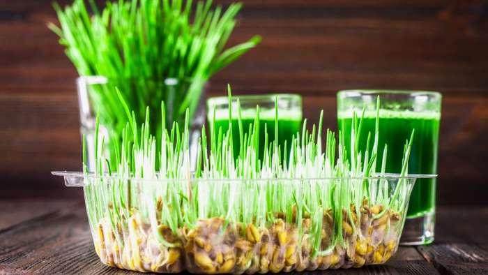 Съедобная грязь, заливные салаты и другие самые странные пищевые тренды в мире Интересное