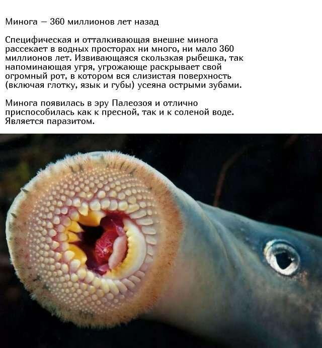 Существа, живущие на нашей планете миллионы лет-10 фото-