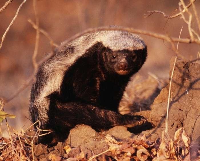 8удивительных существ нашей планеты, которые приводят внедоумение даже ученых