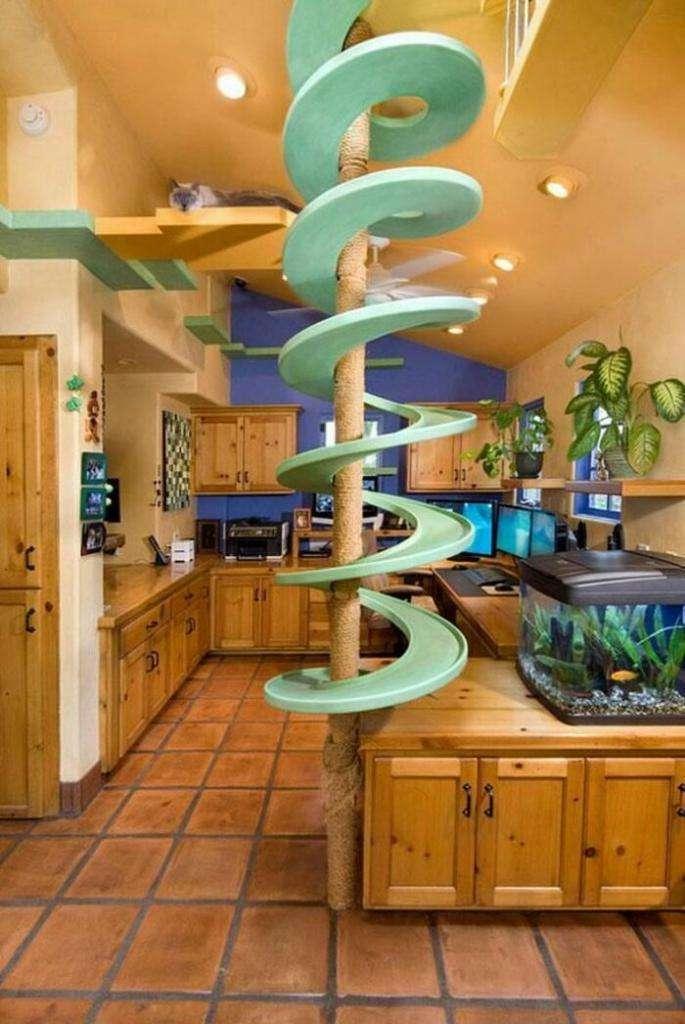 Мужчина потратил 35 тысяч долларов, чтобы превратить свой дом в рай для 18 кошек  Интересное
