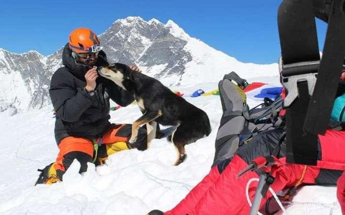 Как первая собака Эверест покорила: это первый случай в истории альпинизма Интересное