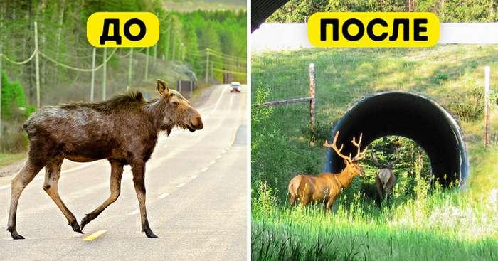 Внекоторых странах уже есть переходы для животных, иони настолько эффективны, что нужны нам везде