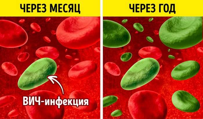 9мифов овирусе иммунодефицита человека, вкоторые досих пор верят многие изнас