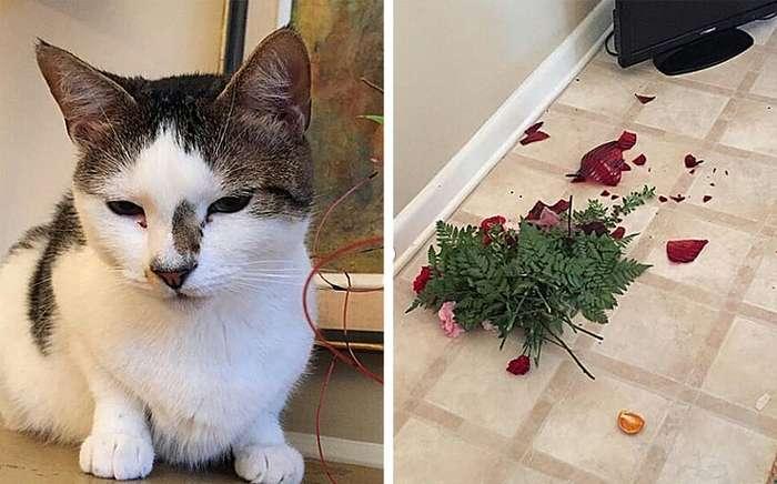 20+кошек, которые давно дали понять, кто вдоме хозяин Интересное