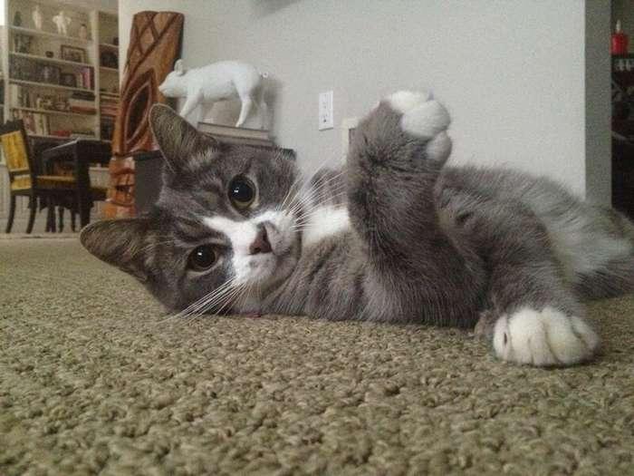Примерные темы кошачьих форумов                      Интересное