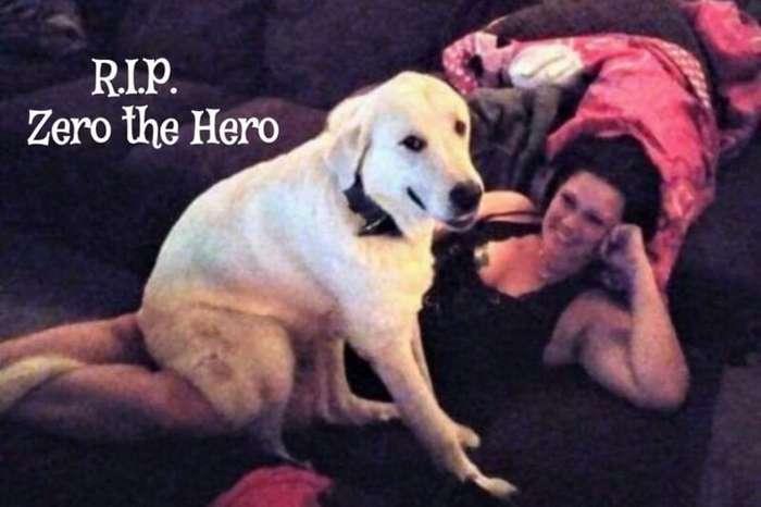 Геройский пес погиб, защищая хозяев во время стрельбы                      Интересное