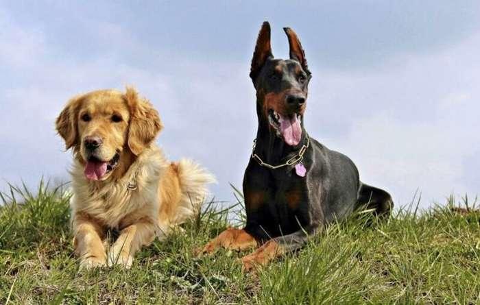 Ученые назвали собак переносчиками смертельно опасного вируса гриппа-1 фото-