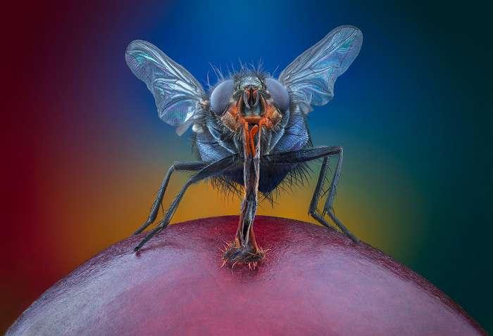 Макрофотографии природы Интересное