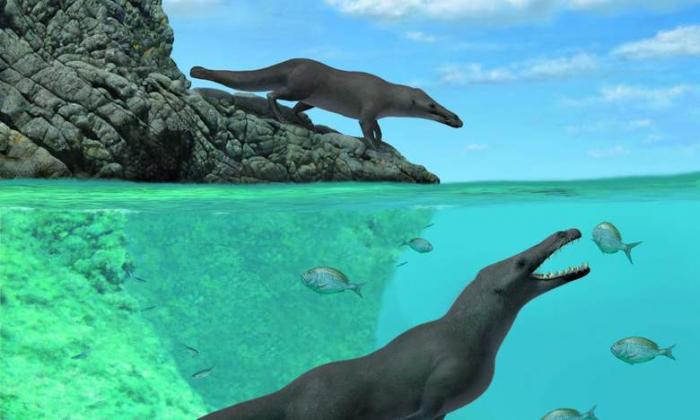 В Перу откопали останки удивительного ходячего кита -4 фото-