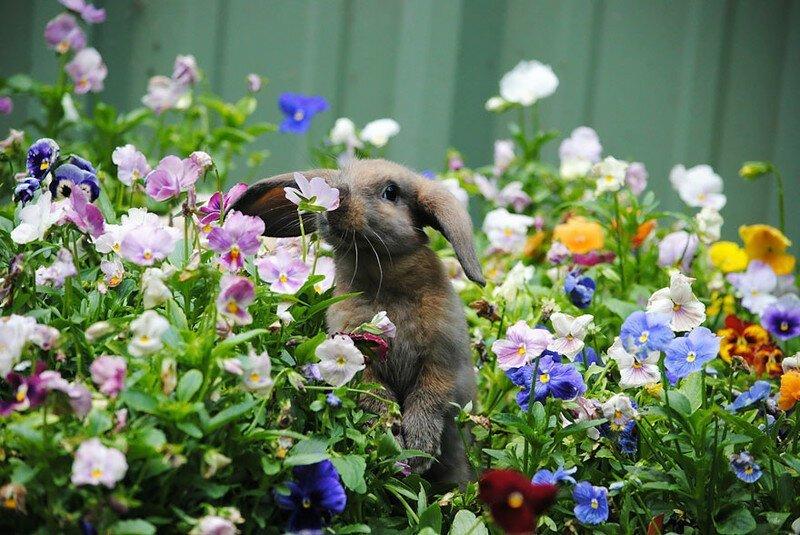 Любопытные факты о весне-9 фото-