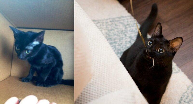 18 фотографий животных до и после того, как они нашли любящих хозяев                      Интересное