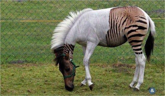 5 удивительных пород животных, выведенных человеком-10 фото-