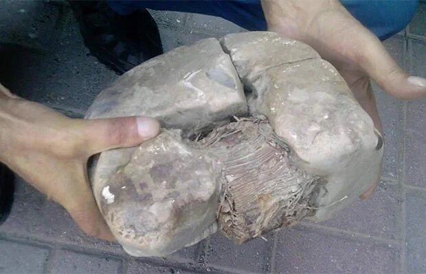 На Балканах нашли древний артефакт, похожий на электрический трансформатор-5 фото-