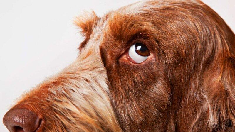 10 собачьих -почему?-, или Всё, что вы хотели знать о лучшем друге человека-11 фото-