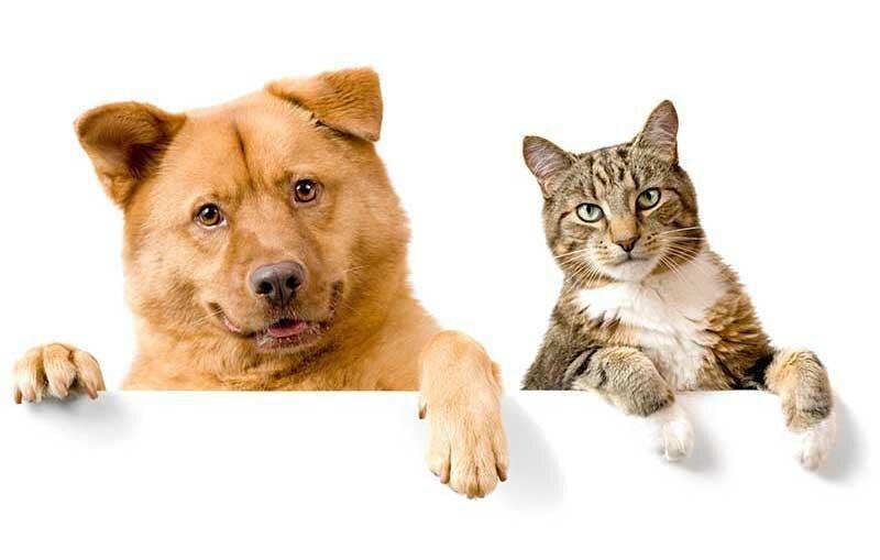 Кто приносит своим хозяевам больше счастья: кот или все-таки собака                      Интересное