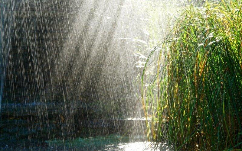 Почему так приятно пахнет во время дождя?-2 фото-