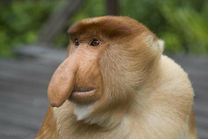 15 животных, чьи носы так и лезут куда не следует                      Интересное