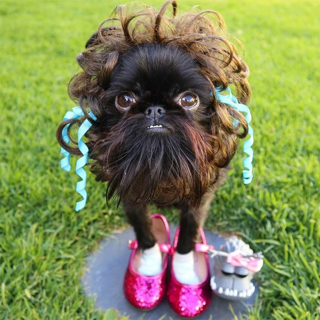 Собачка, у которой 265 тысяч подписчиков в Instagram                      Интересное